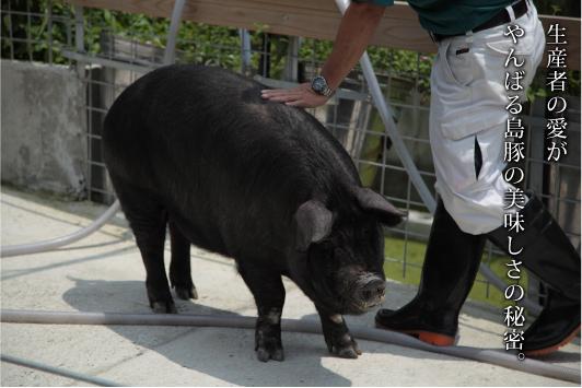 やんばる島豚とは